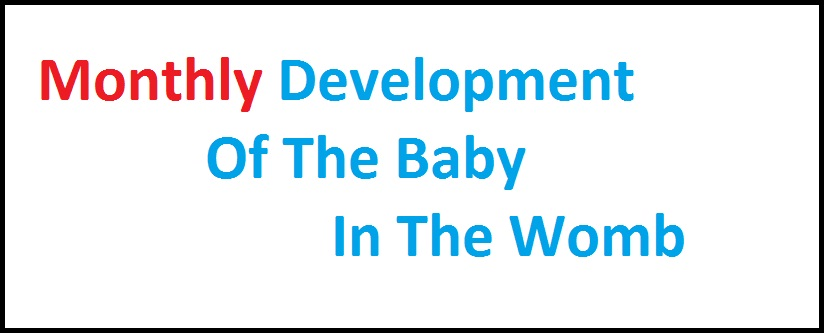 Monthly development of the baby in the womb
